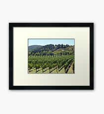 Napa Valley Vineyard Framed Print