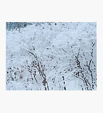 Snowy Weight Photographic Print