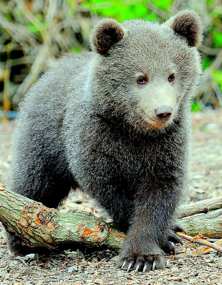 Bear with me by Alan Mattison