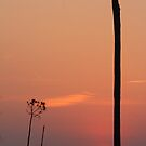 simple sunset by leapdaybride