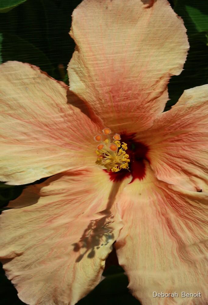 Peach by Deborah  Benoit