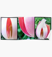 Tulip triptych  Poster