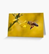 Honeybee (Apis mellifera) Greeting Card