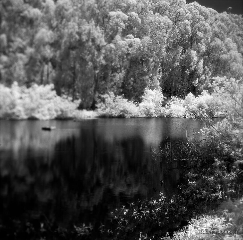 Pine Lake by Rodney Johnson
