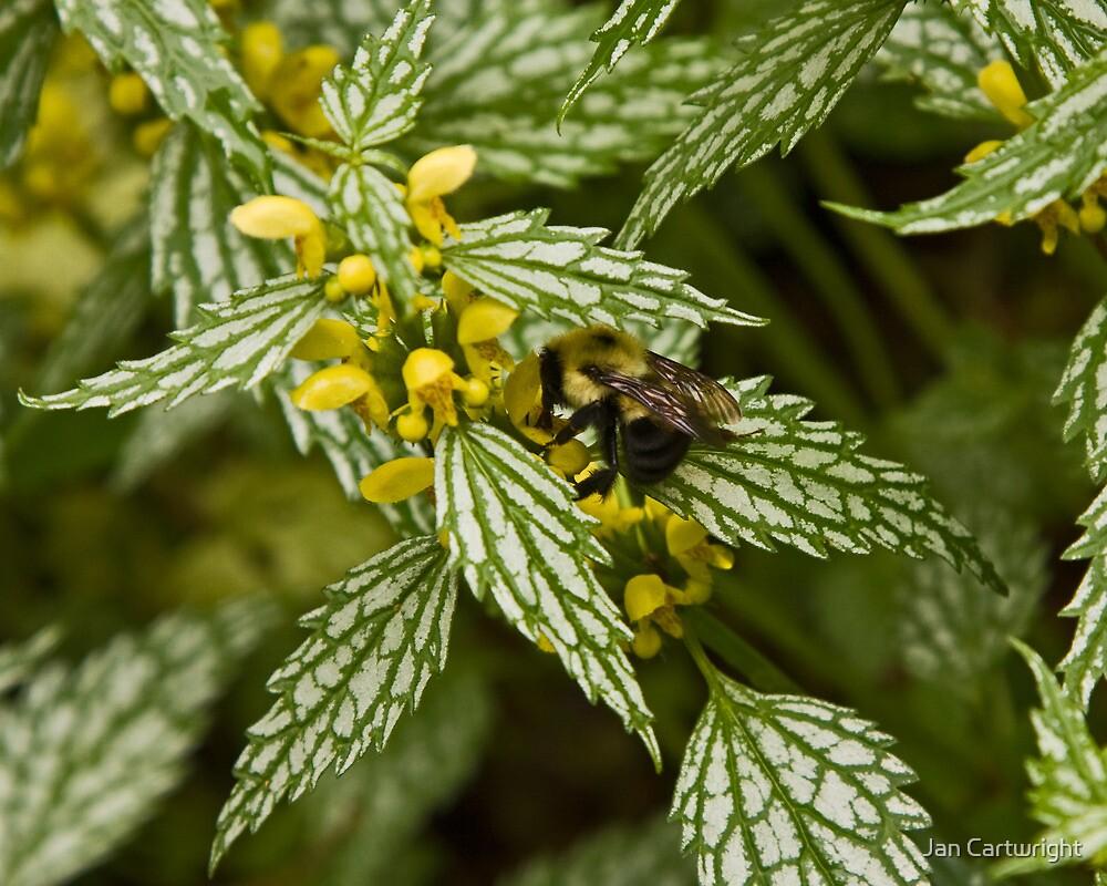Worker Bee by Jan Cartwright