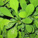 Rain Drop Sunday by Wini Minerd