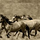 Mares on the run by Sue Ratcliffe