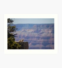 Squirrel  ...  livin it up in the Grand Canyon. Art Print