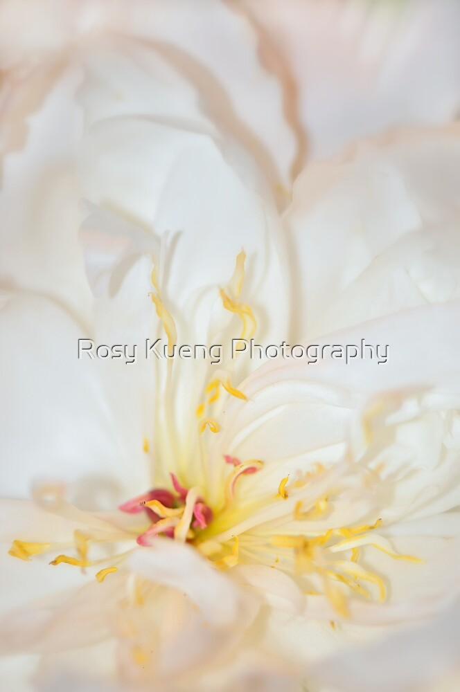 Reaching out by Rosy Kueng Photography