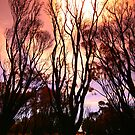 After The Fires II by Chris Paddick