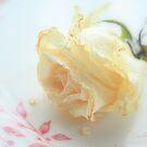 Dried Rose by aMOONy
