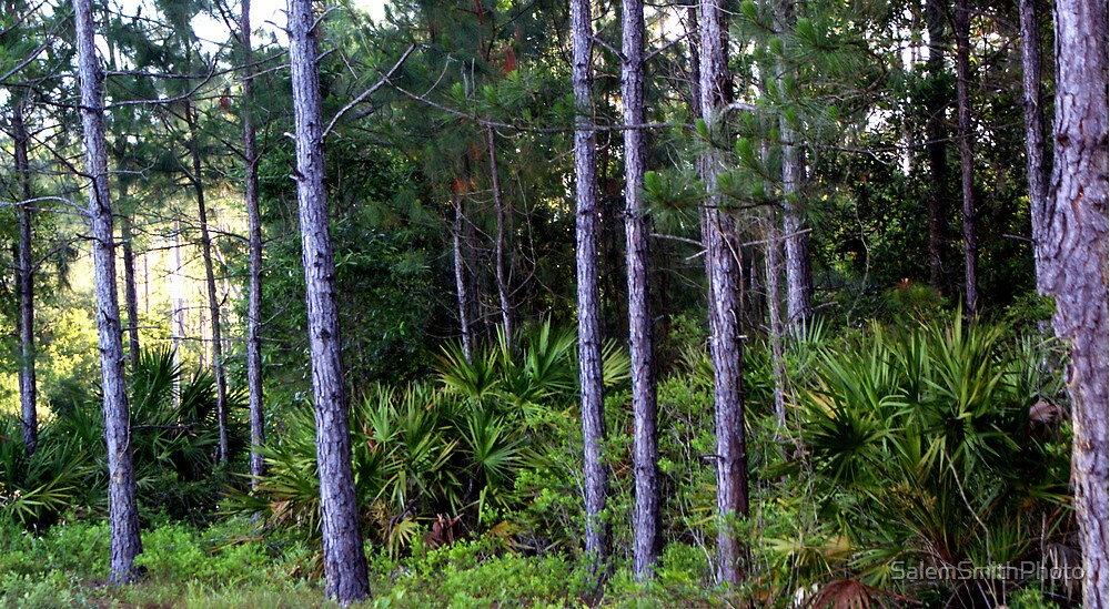 Florida Brush--Completely Unedited. by SalemSmithPhoto