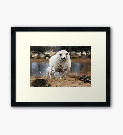 It is Spring - Mother Sheep with Lamb Framed Print