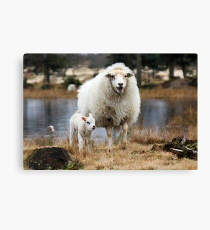 It is Spring - Mother Sheep with Lamb Canvas Print