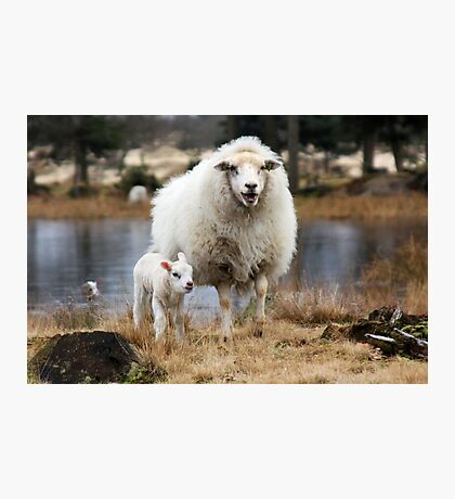 It is Spring - Mother Sheep with Lamb Photographic Print