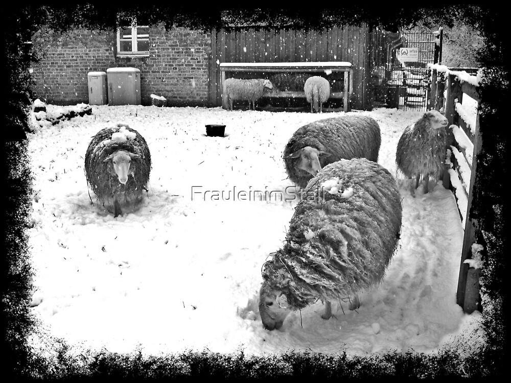 Sheep in winter by FrauleinimStall