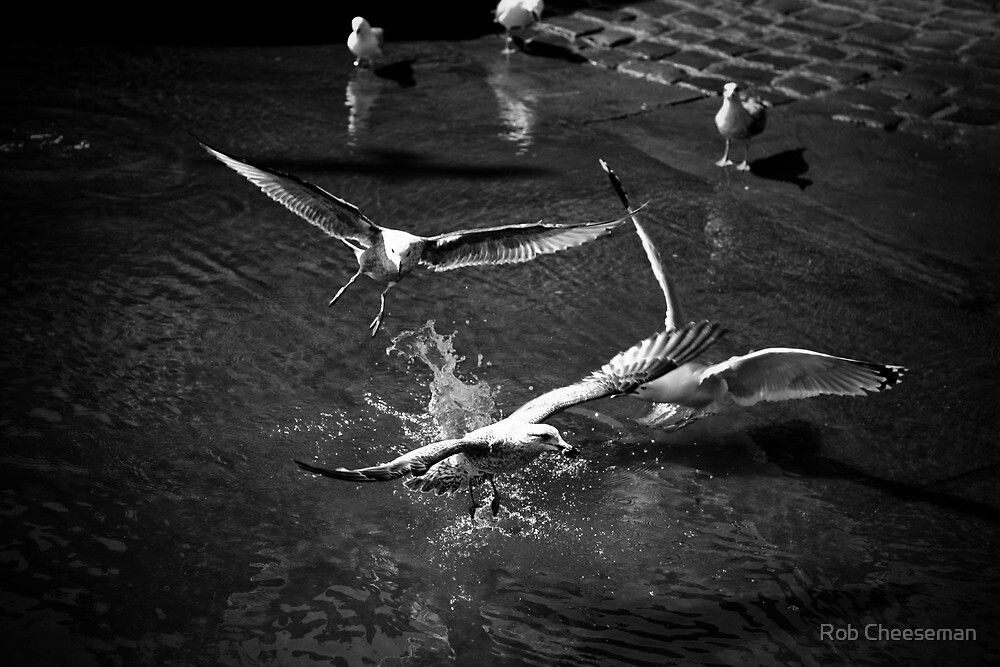Something about seagulls. by Rob Cheeseman