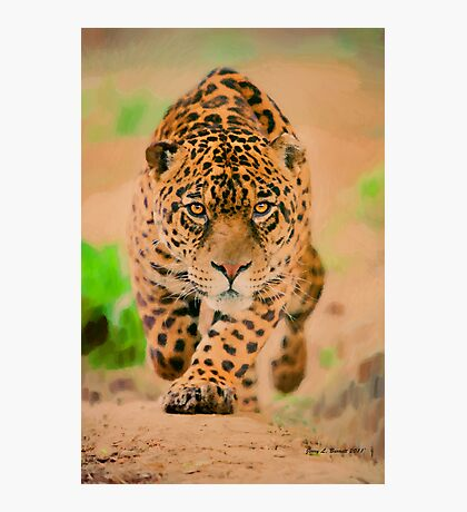 Prowling Leopard Photographic Print