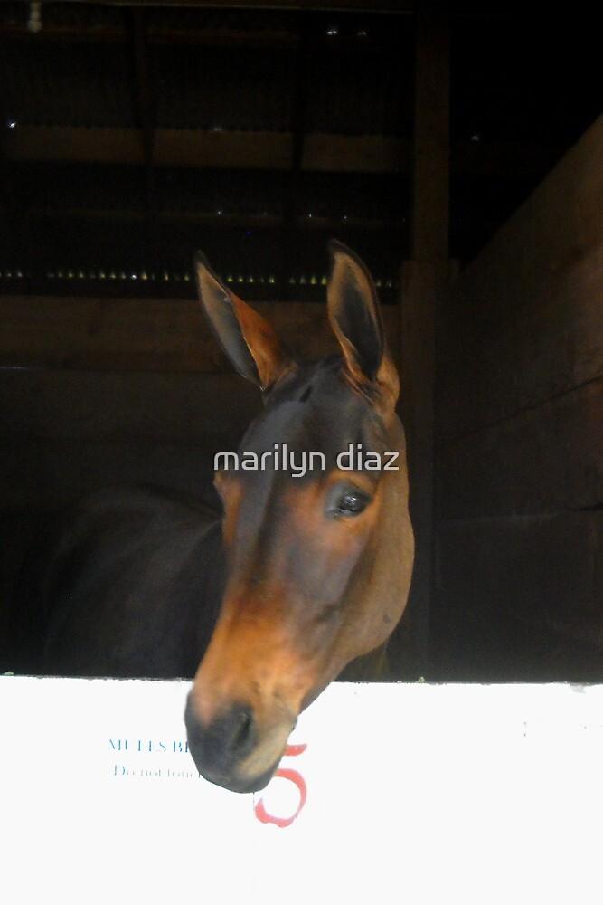 Mules by marilyn diaz