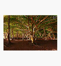 Na Pali Trail, Maui - HAWAII Photographic Print