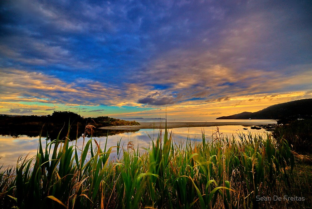 Captain Cook Creek Reeds HDR - Bruny Island, Tasmania, Australia by PC1134