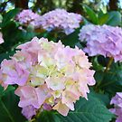Floral Pink Hydrangea Flower Green Garden by BasleeArtPrints