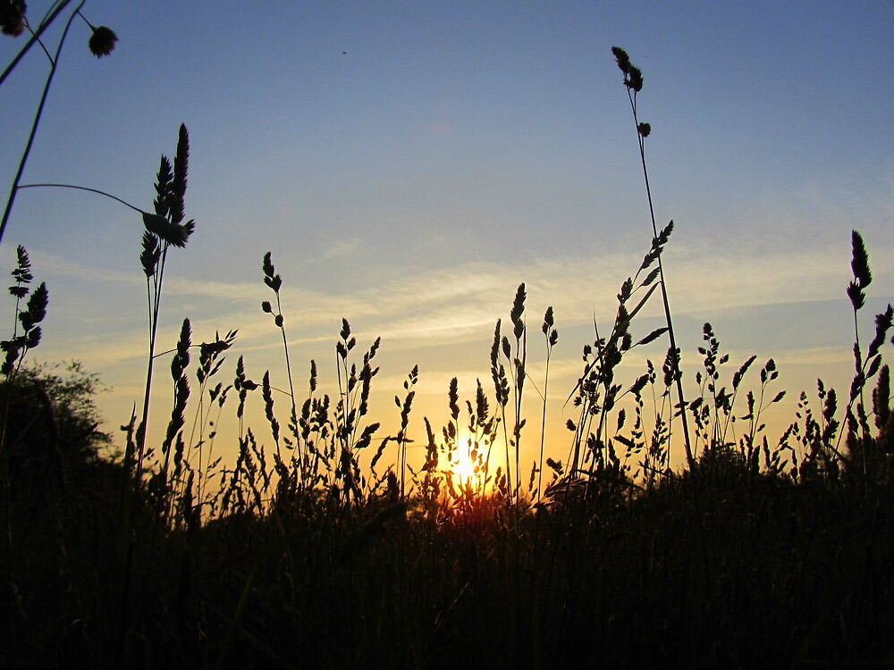 Sunset Thru the Hayfield... by cookie1951