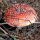 fly agaric toadstool by Amanda le Bas de Plumetot