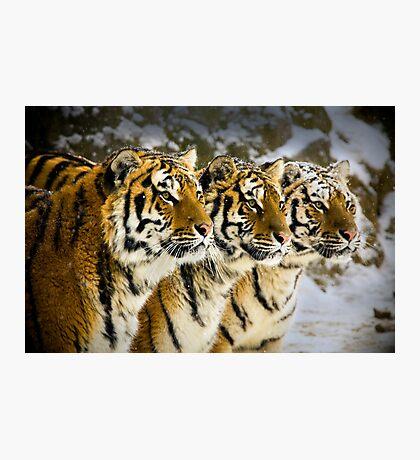 Three Brothers! Photographic Print