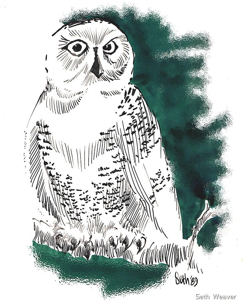 Snow Owl II  by Seth  Weaver