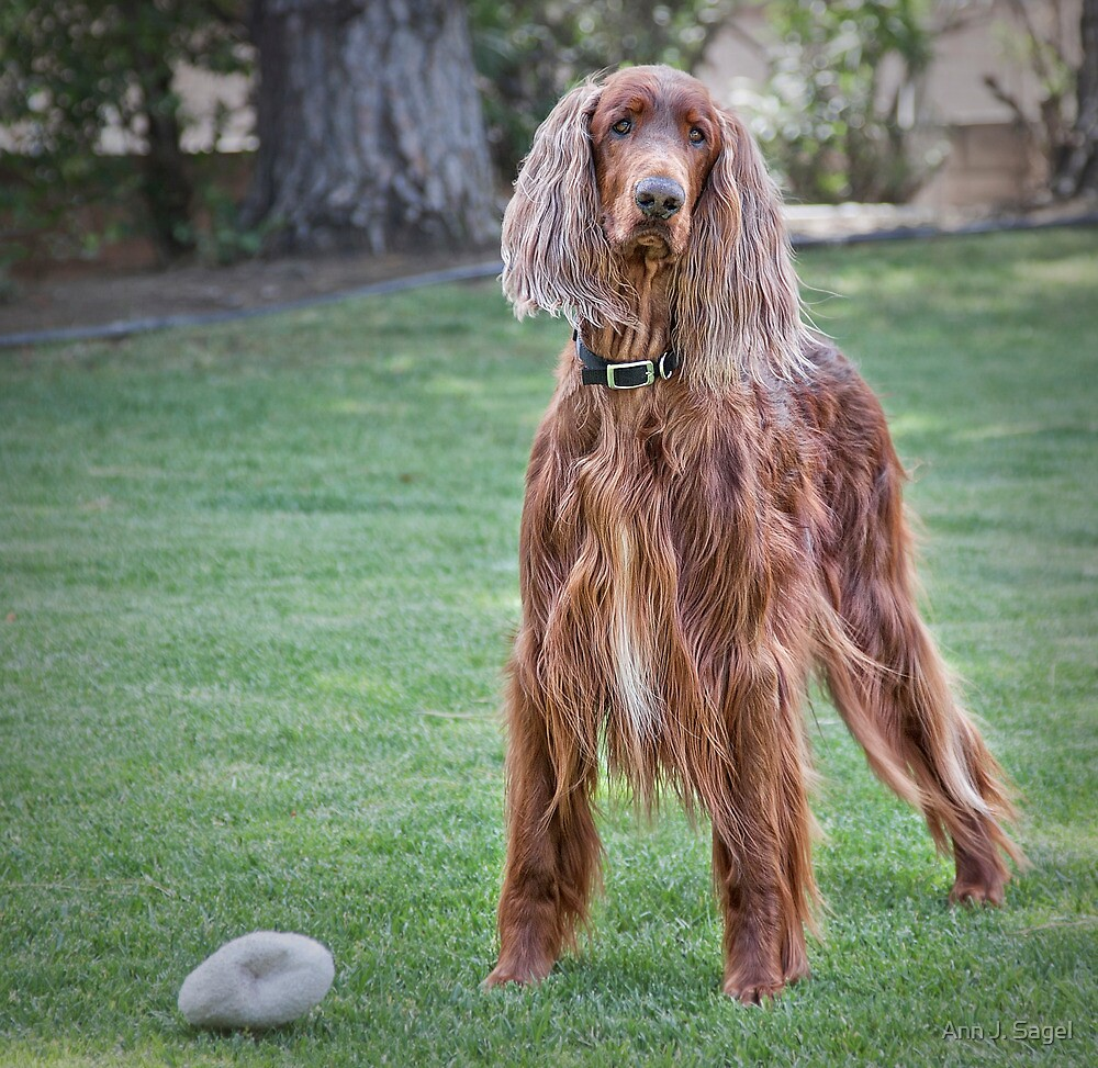 Will You Play Squeaker with Me? by Ann J. Sagel