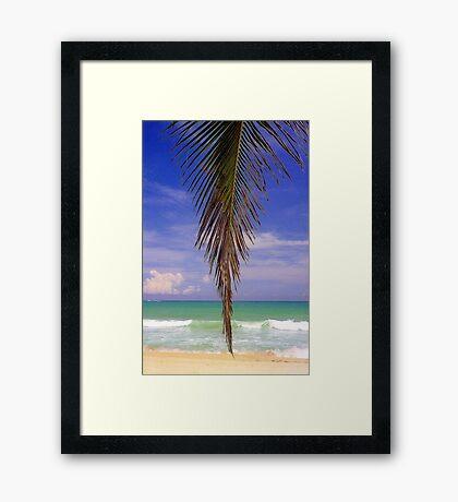 Shady Palm, Puerto Rico  Framed Print