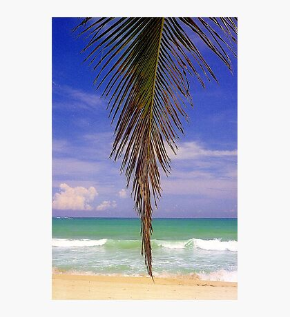 Shady Palm, Puerto Rico  Photographic Print