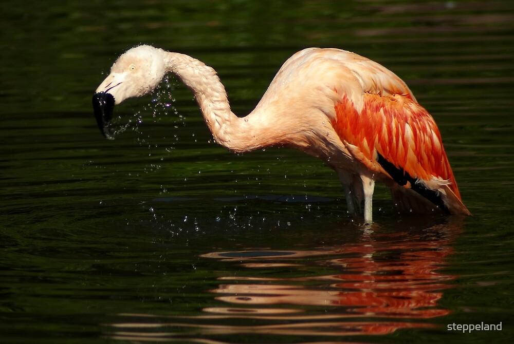 """""""Shake it off"""" - Bathing Flamingo by steppeland"""