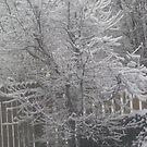 snow trees 1 by nancy dixon