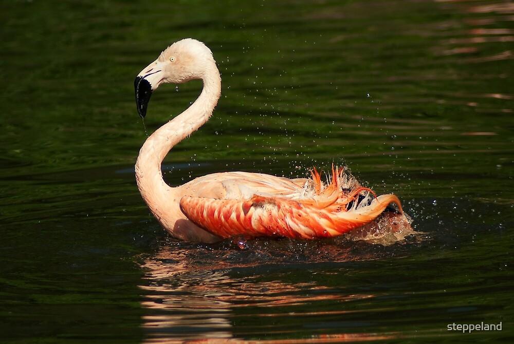 Flitter-flutter - Bathing flamingo by steppeland