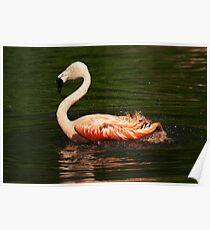 Flitter-flutter - Bathing flamingo Poster