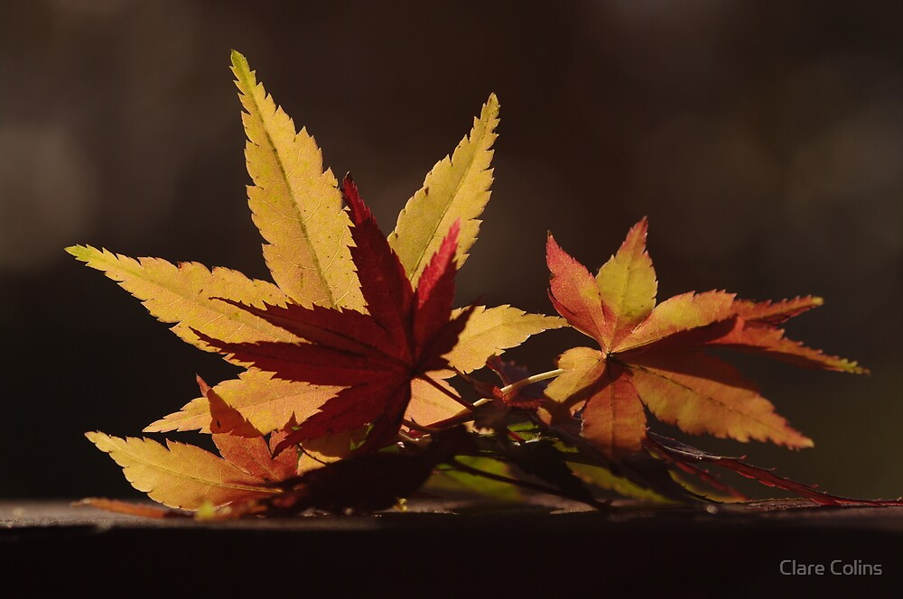 colours of autumn by Clare Colins