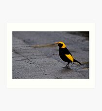 Bright Bird on a Dull Day Art Print
