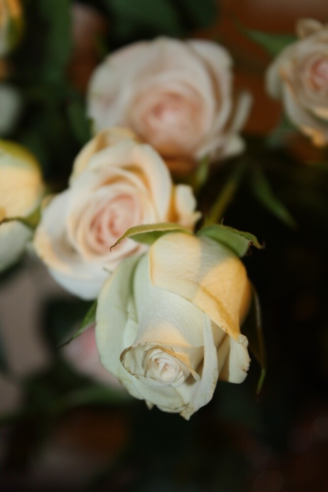 Pale Roses by wingsonafield