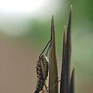 A bug's life... by newcastlepablo