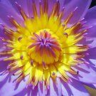 inside my flower by newcastlepablo