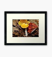Yellow Cap & White Stalkings Framed Print