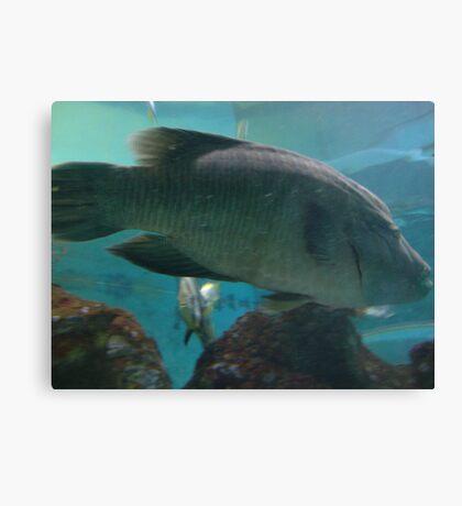 Big fish ! Canvas Print