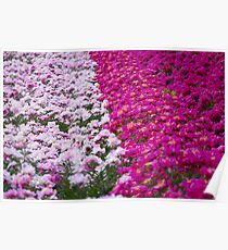 An Ocean Full of Peonies Poster