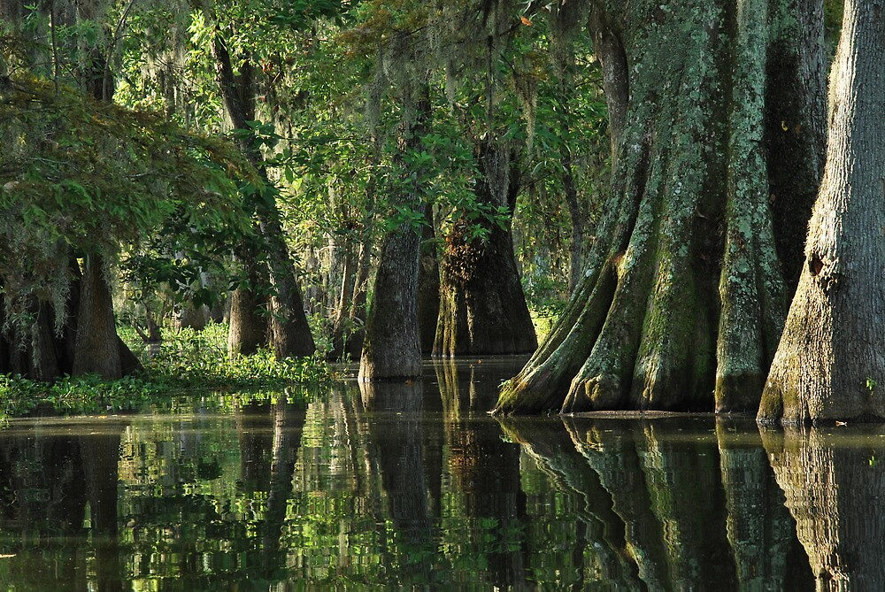 Quot Louisiana Bayou Quot By Linda Trine Redbubble