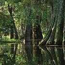 Louisiana Bayou by Linda Trine