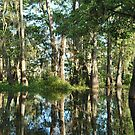 Reflections in a Swamp by Linda Trine