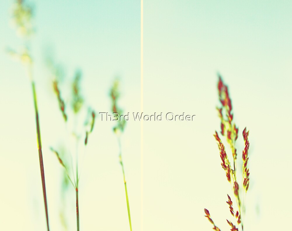 The tallest blade of grass is the first to be cut by Th3rd World Order