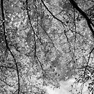 Autumn detail by Catherine Davis